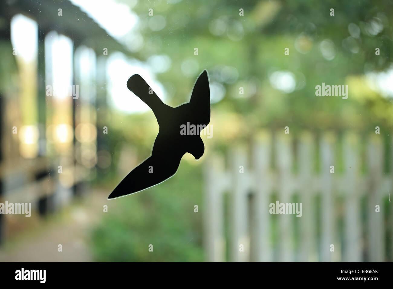 Bird strike deterrent Falcon (Falco) on window - Stock Image