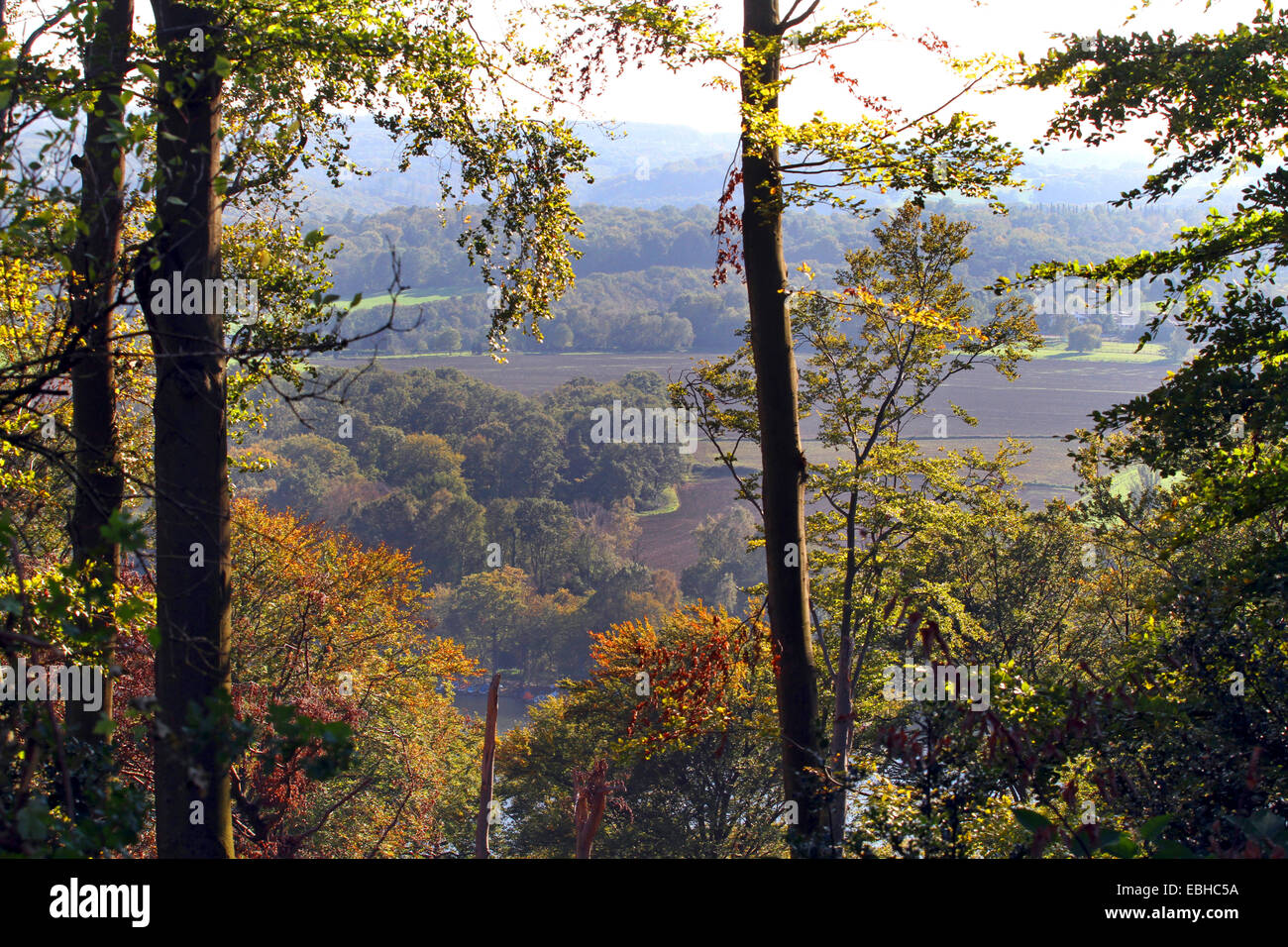 view through gaps in Schelllenberg forest after storm, Germany, North Rhine-Westphalia, Ruhr Area, Essen - Stock Image