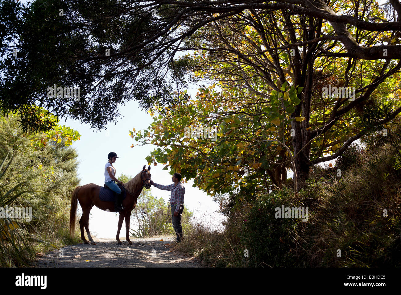Horse riding, Pakiri Beach, Auckland, New Zealand - Stock Image