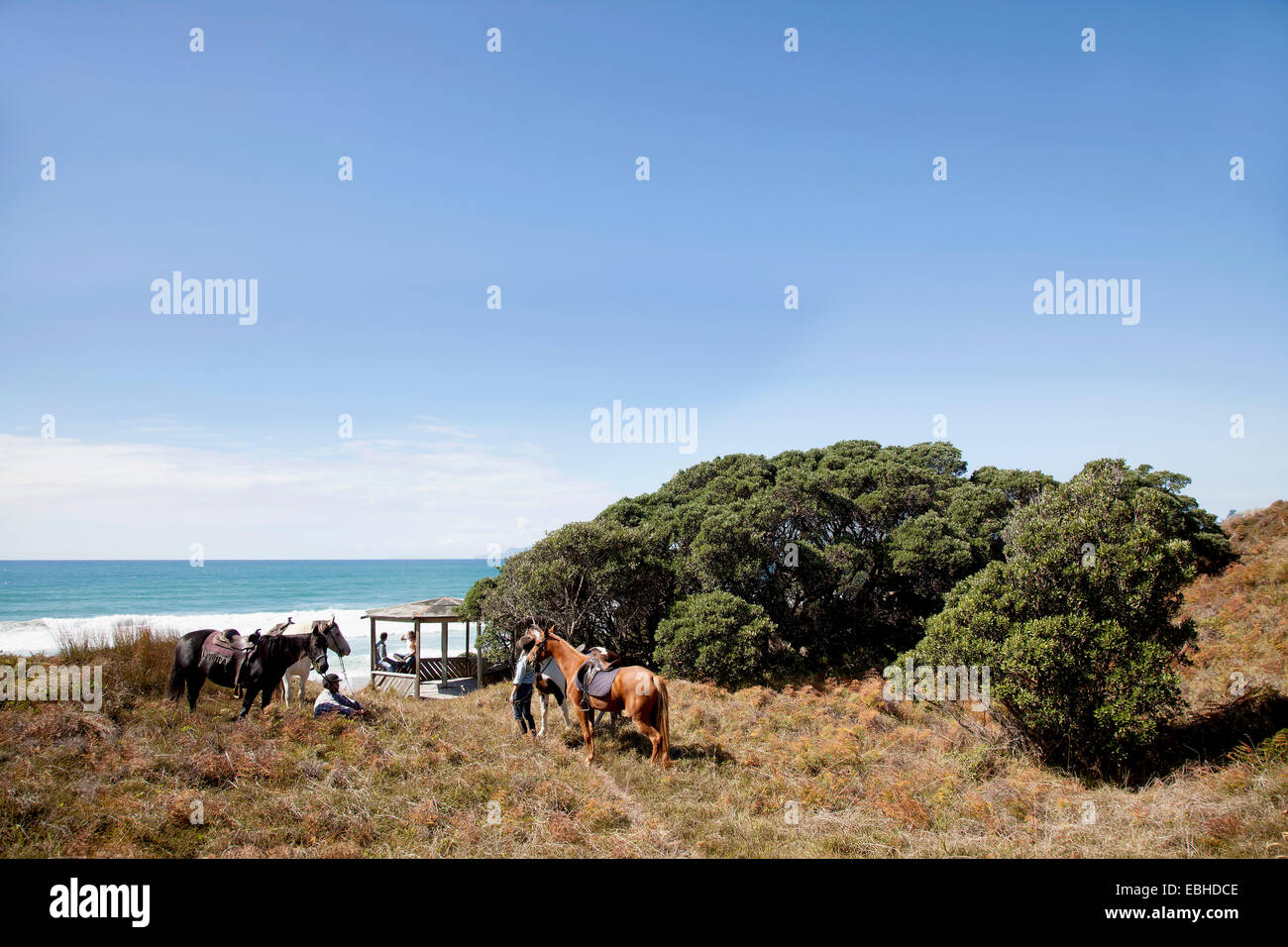 Horse riders taking break, Pakiri Beach, Auckland, New Zealand - Stock Image