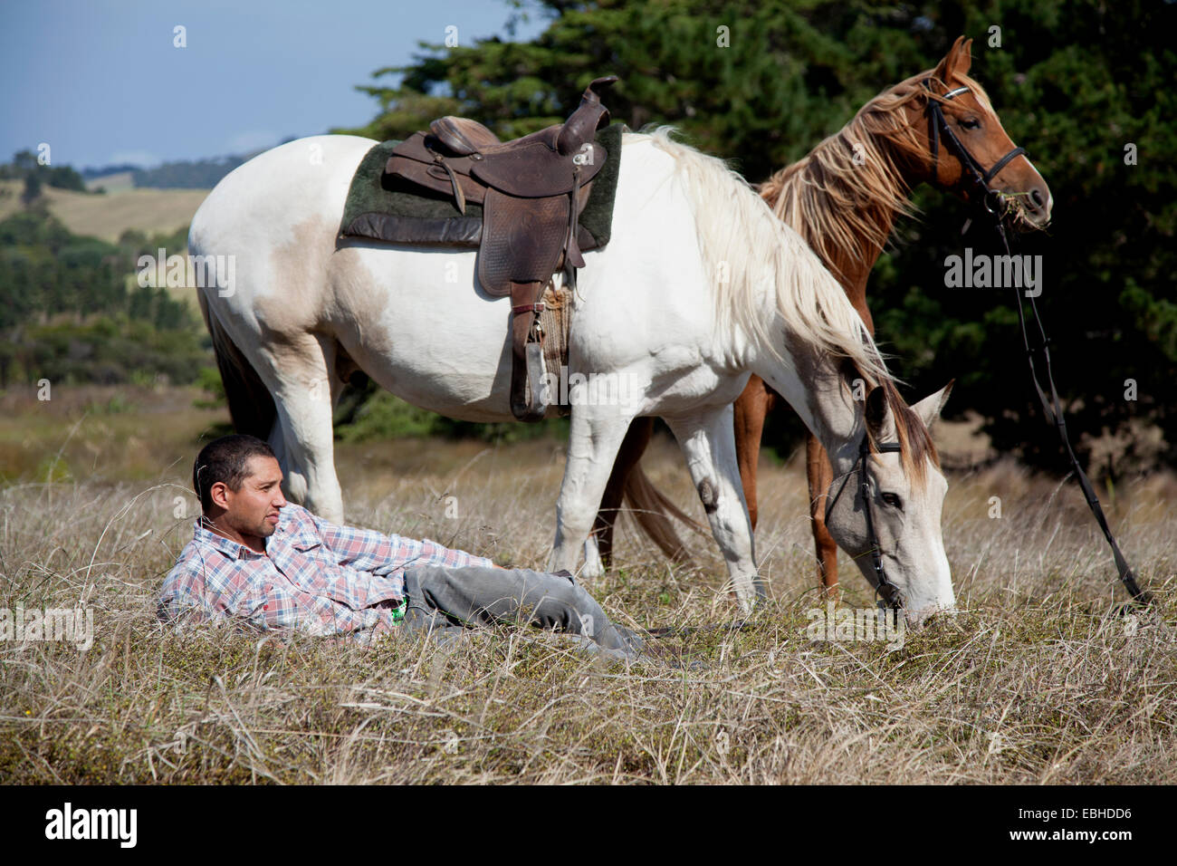 Horse rider taking break on grass, Pakiri Beach, Auckland, New Zealand - Stock Image