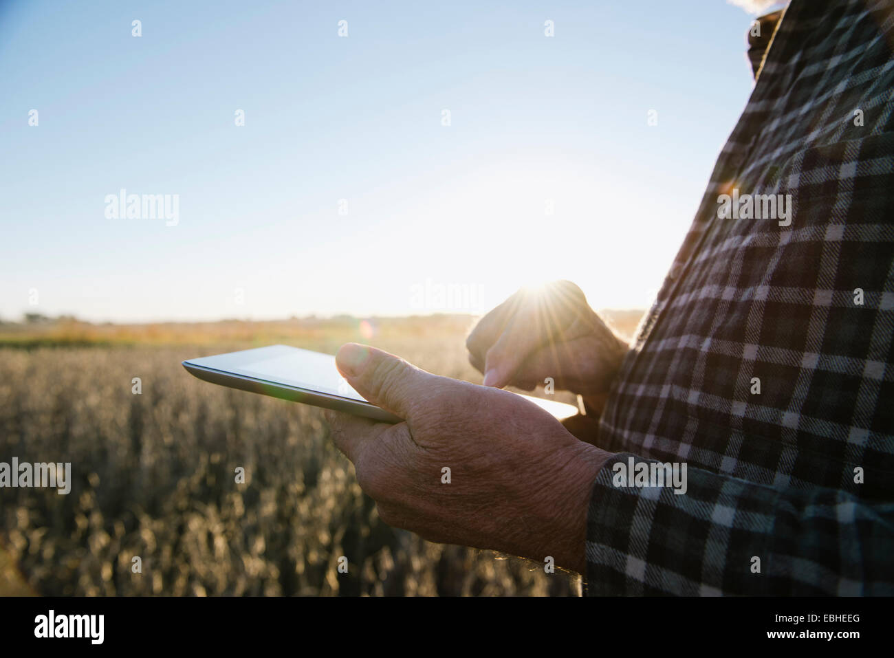 Cropped shot of senior male farmer using digital tablet in soybean field, Plattsburg, Missouri, USA - Stock Image