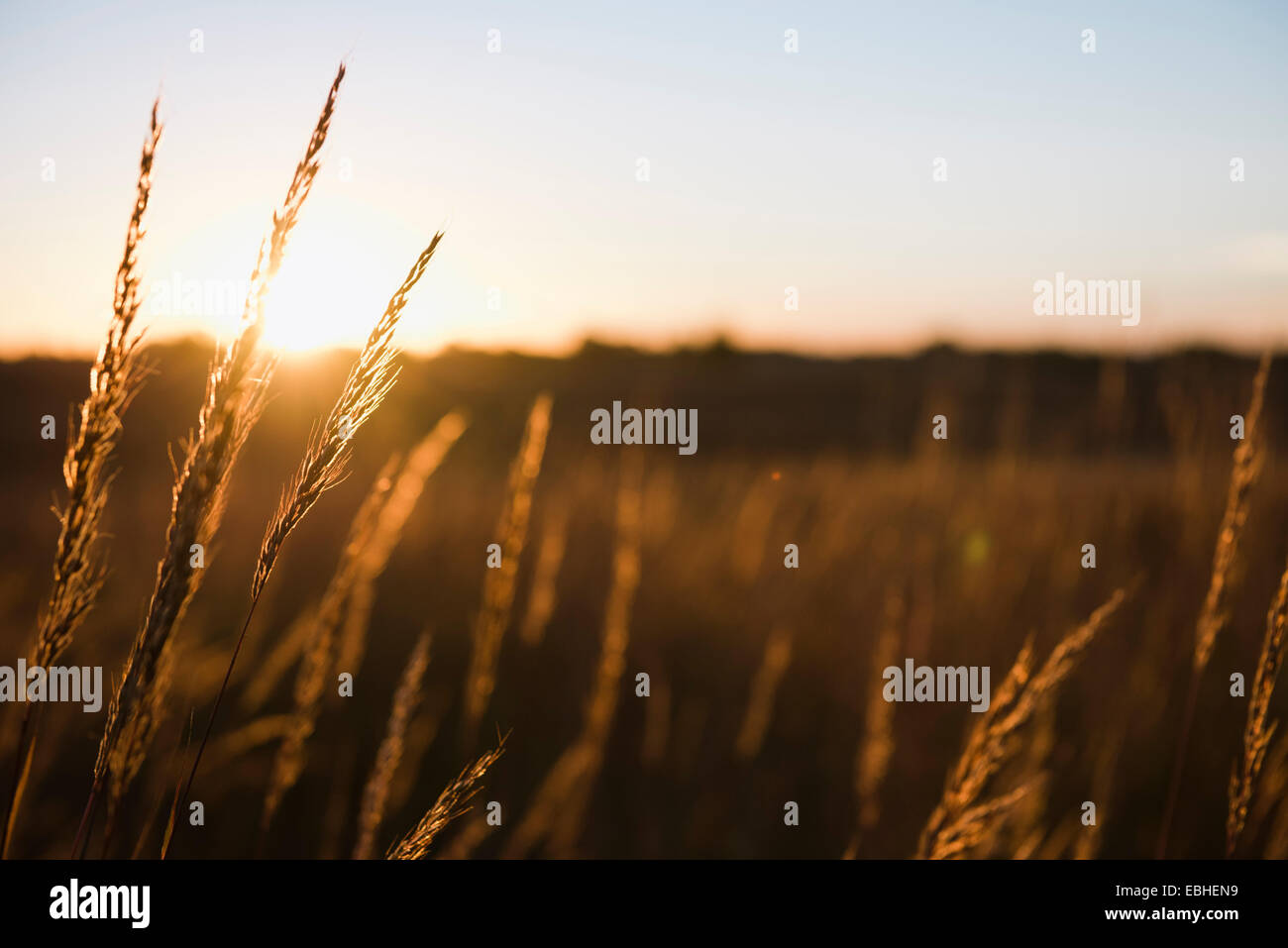 United States Weather Wheat Field Stock Photos & United States ...