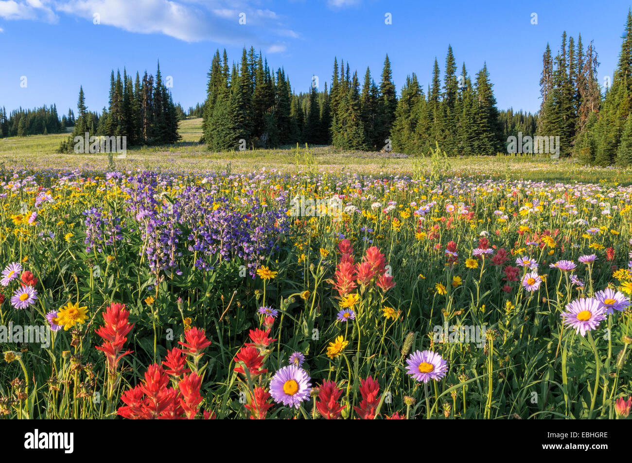 Trophy meadows, Wells Gray Provincial Park, British Columbia, Canada - Stock Image