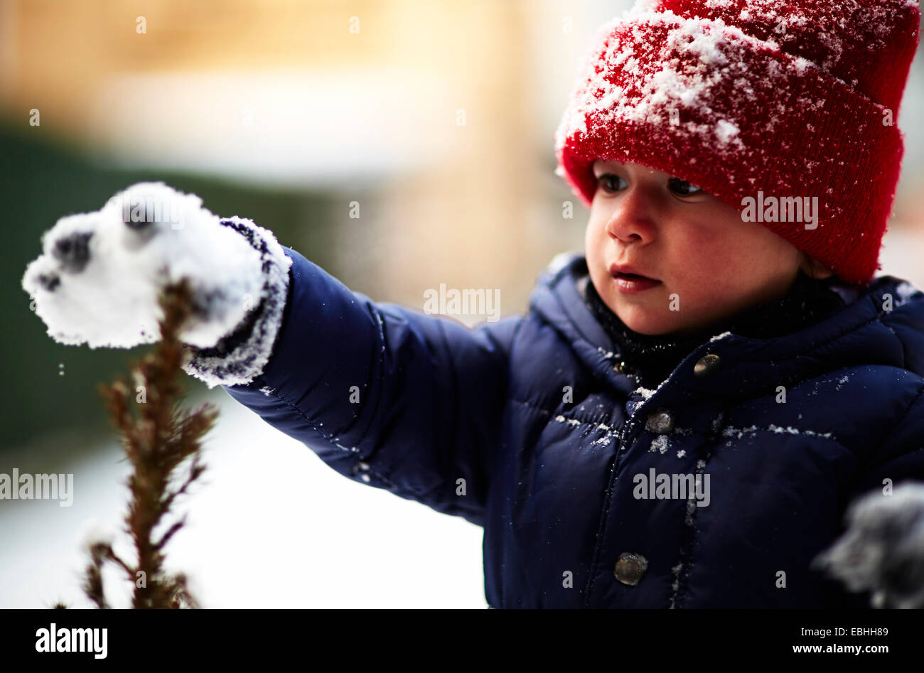 Close up of male toddler touching plant with snow covered glove - Stock Image