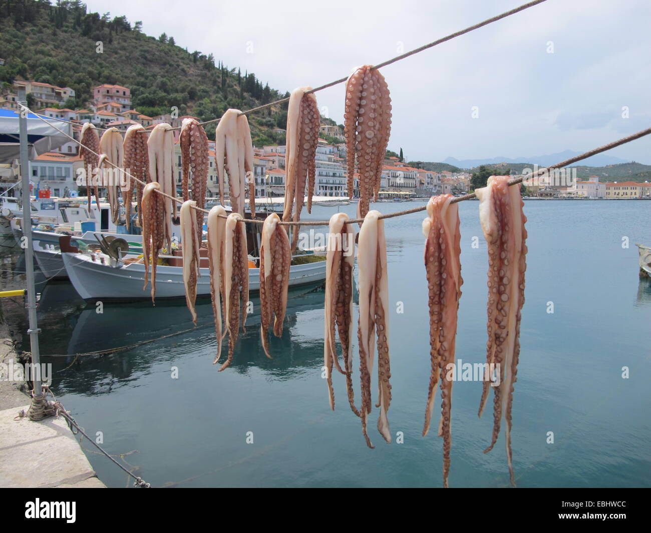 Squid drying ion the sun in Greece - Stock Image