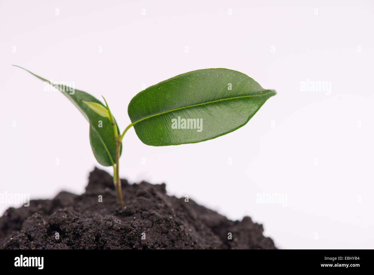 Concept of new life - Stock Image