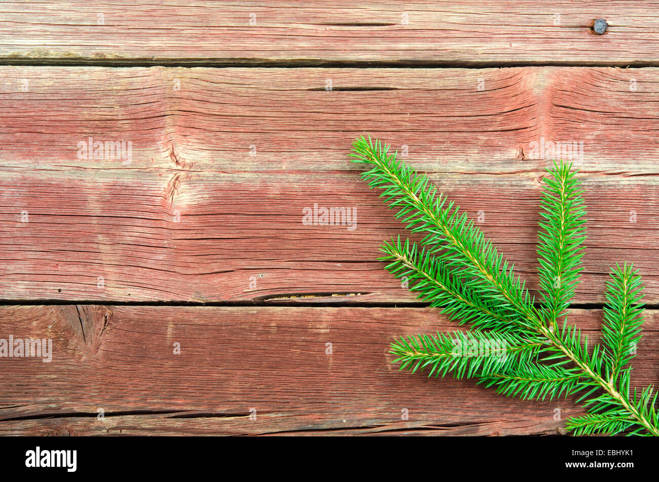 One spruce twig at an old wooden plank surface - Stock Image