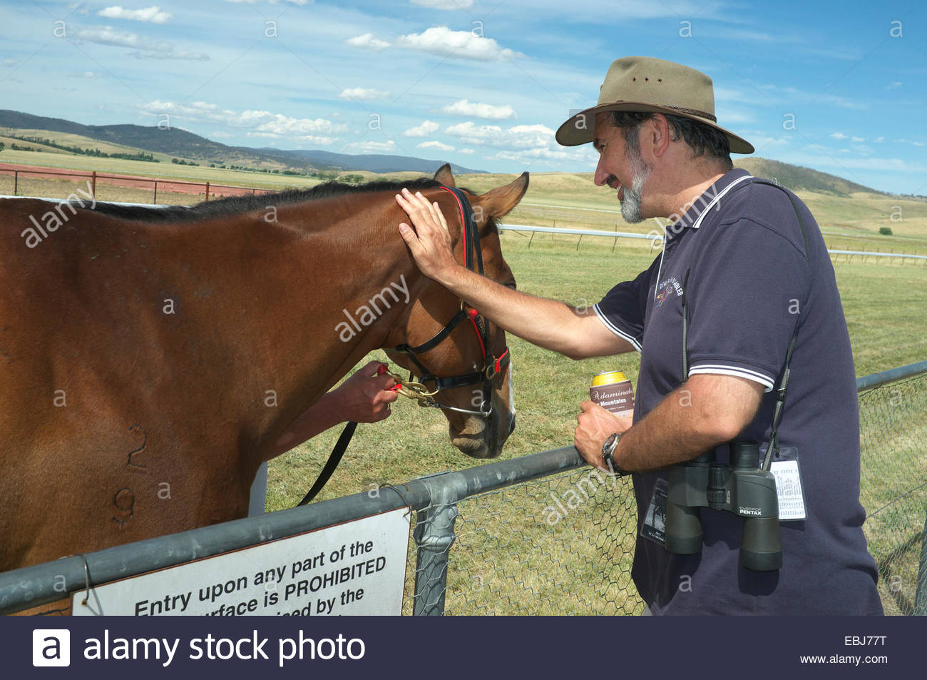 A fan pats race horse Takeover Target that was a special guest at the Adaminaby Races, in Snowy Mountains, NSW, - Stock Image