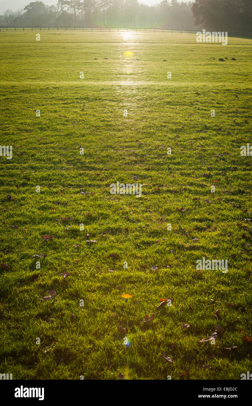 Glistening spiders webs in the grass reflecting the low afternoon sun - Stock Image