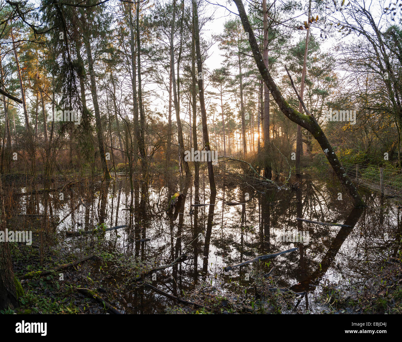 Flooded landscape at Lavington Common, West Sussex, UK - Stock Image
