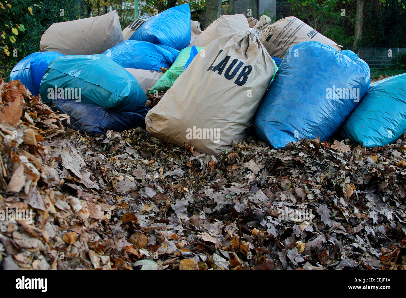 sacks full off autumn foliage on a large foliage heap waiting to be taken to the composting plant, Germany, North - Stock Image
