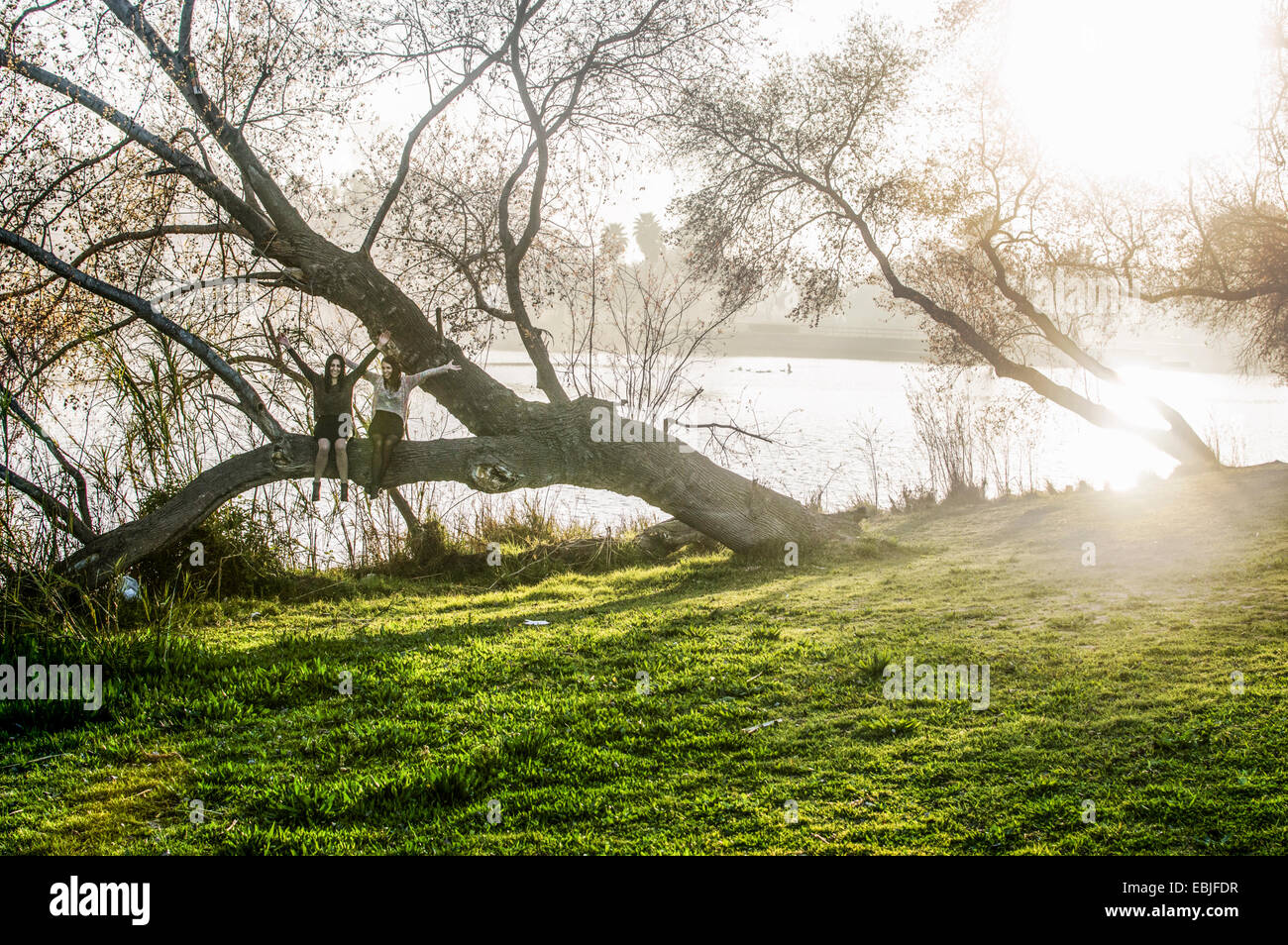 Two young women sitting in tree, arms outstretched - Stock Image