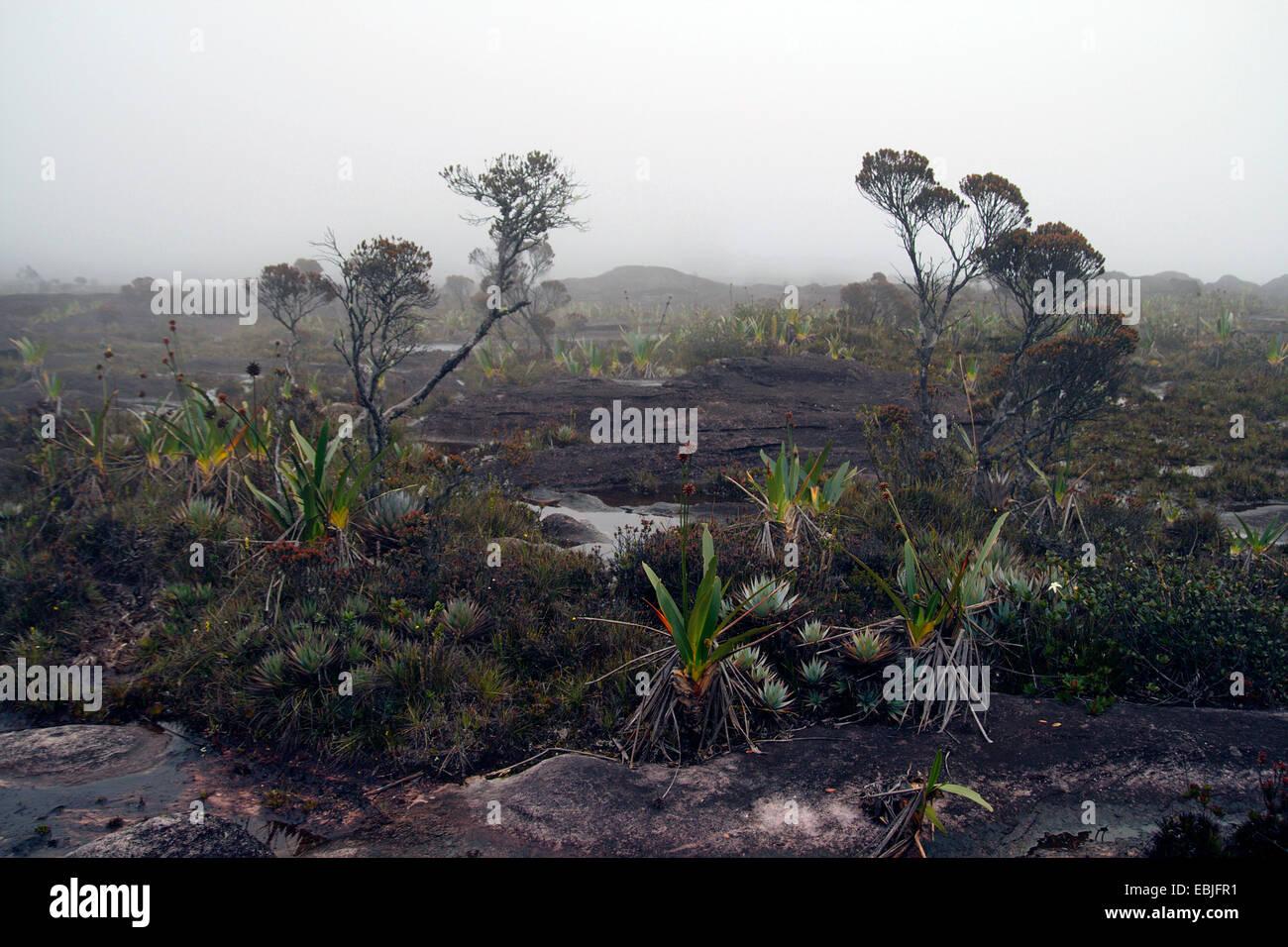 rock landscape on the tableland of the mesa Mount Roraima, Venezuela, Canaima National Park - Stock Image