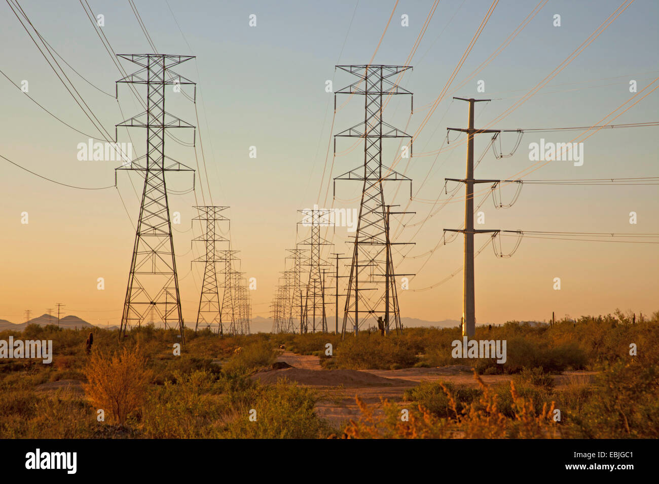 power poles and high-voltage lines in the desert, USA, Arizona, Sonoran - Stock Image