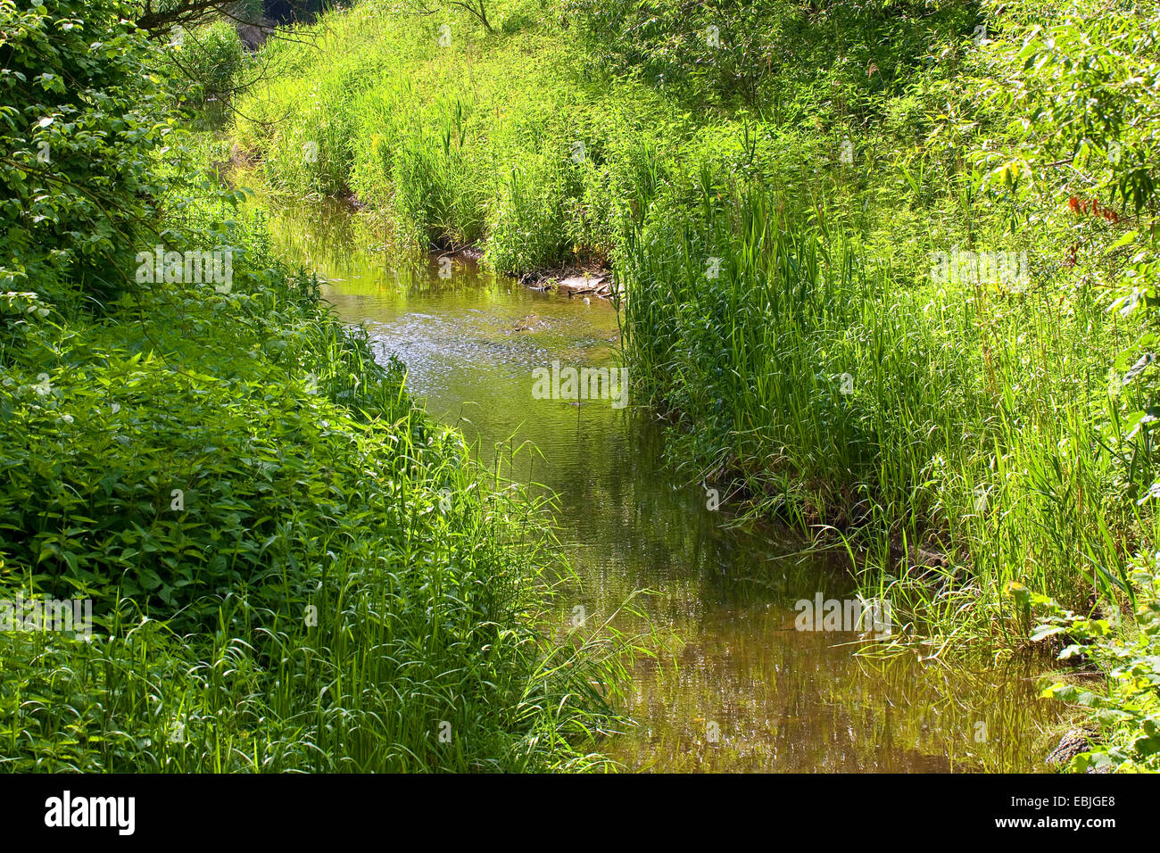 brook through a meadow with affluent riparian vegetation, Germany - Stock Image