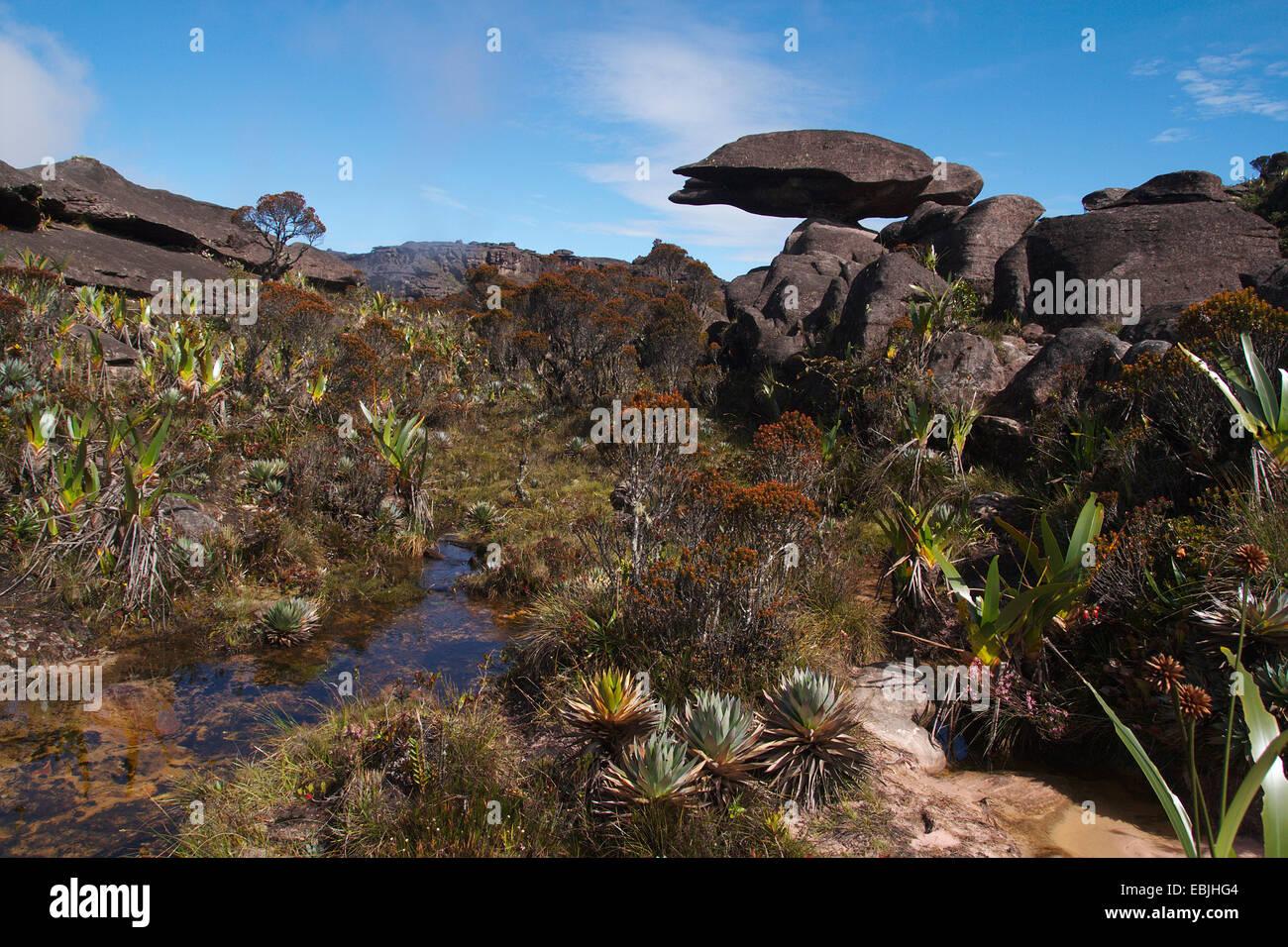 bizarr sandstone formation 'flying turtle' on Mount Roraima, Venezuela, Canaima National Park, Roraima Tepui Stock Photo