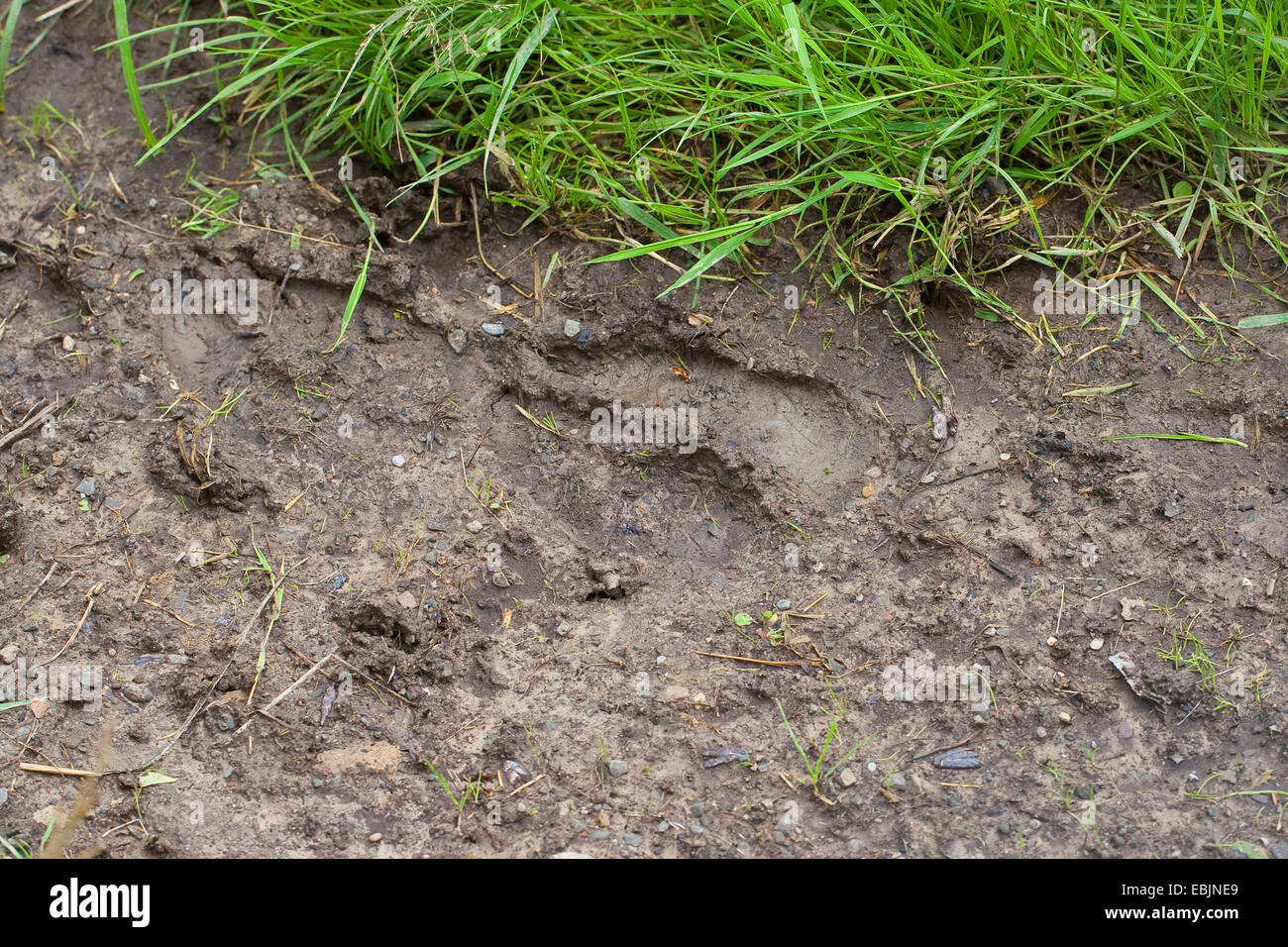 Animal Hoof Print Stock Photos Animal Hoof Print Stock Images Alamy