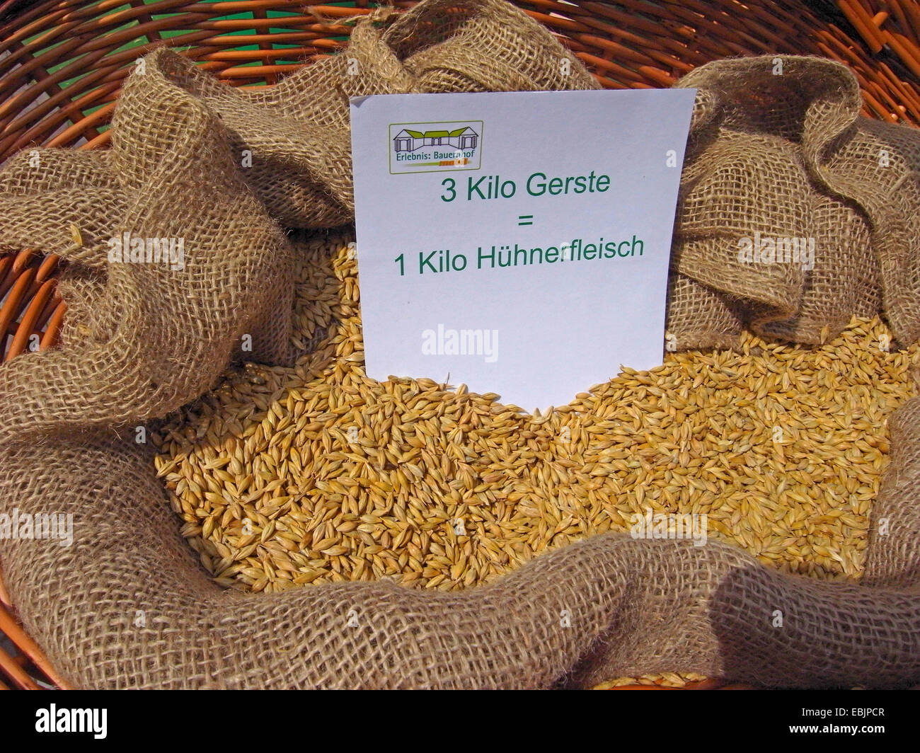 visualization of the energy requirement for meat production: 3 kg barley in a basket - the amount needed for 1 kg - Stock Image