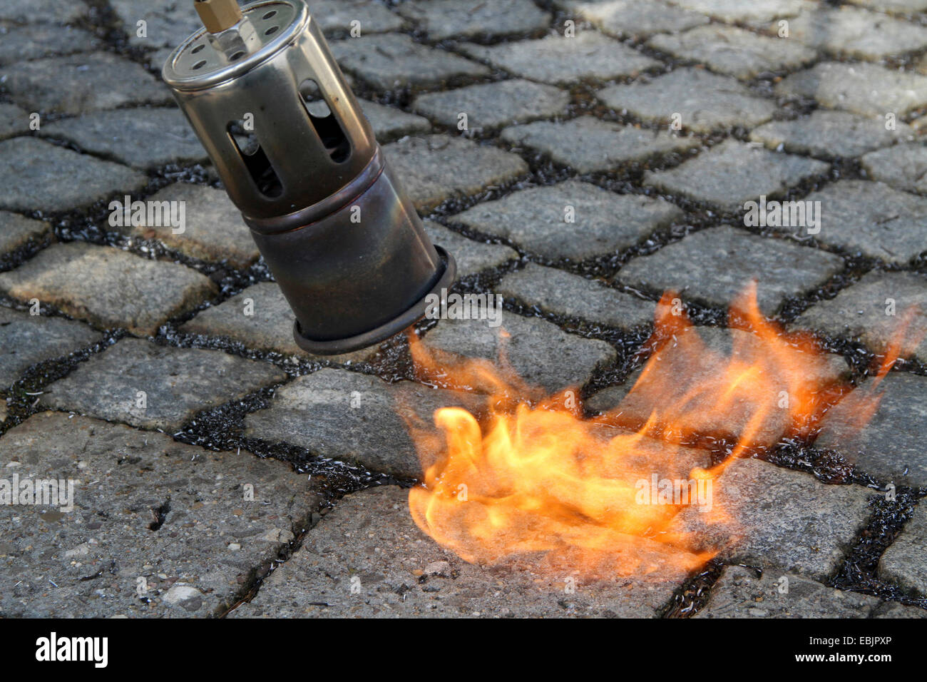 removing weeds from the gaps of a paved path by a gas flame, Germany, Nordrhein Westfalen, Ruhr Area, Essen - Stock Image