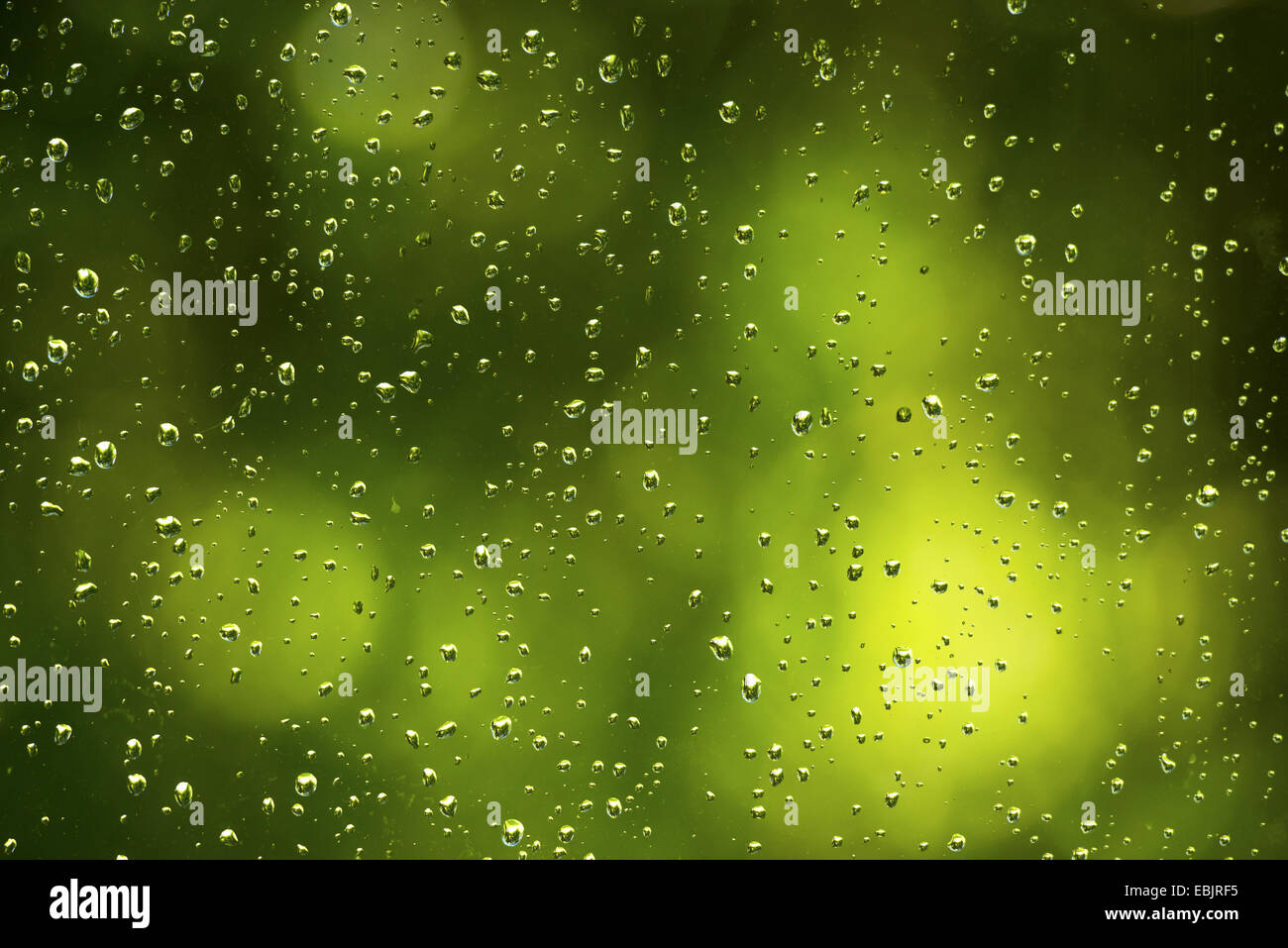 raindrops at a window pane, Germany - Stock Image