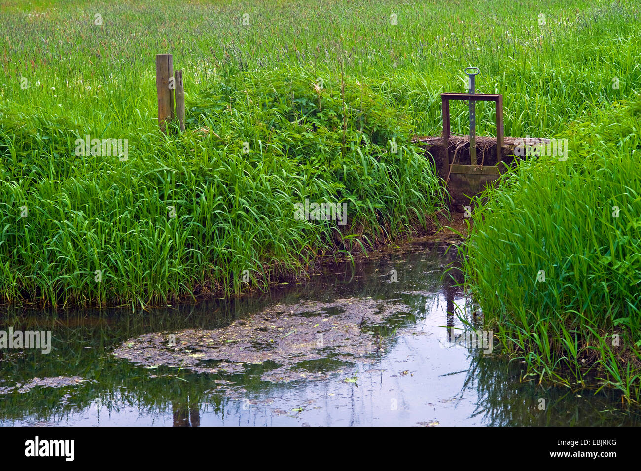 little sluice at a ditch through the Wuemme meadows, Germany, Bremen-Borgfeld - Stock Image