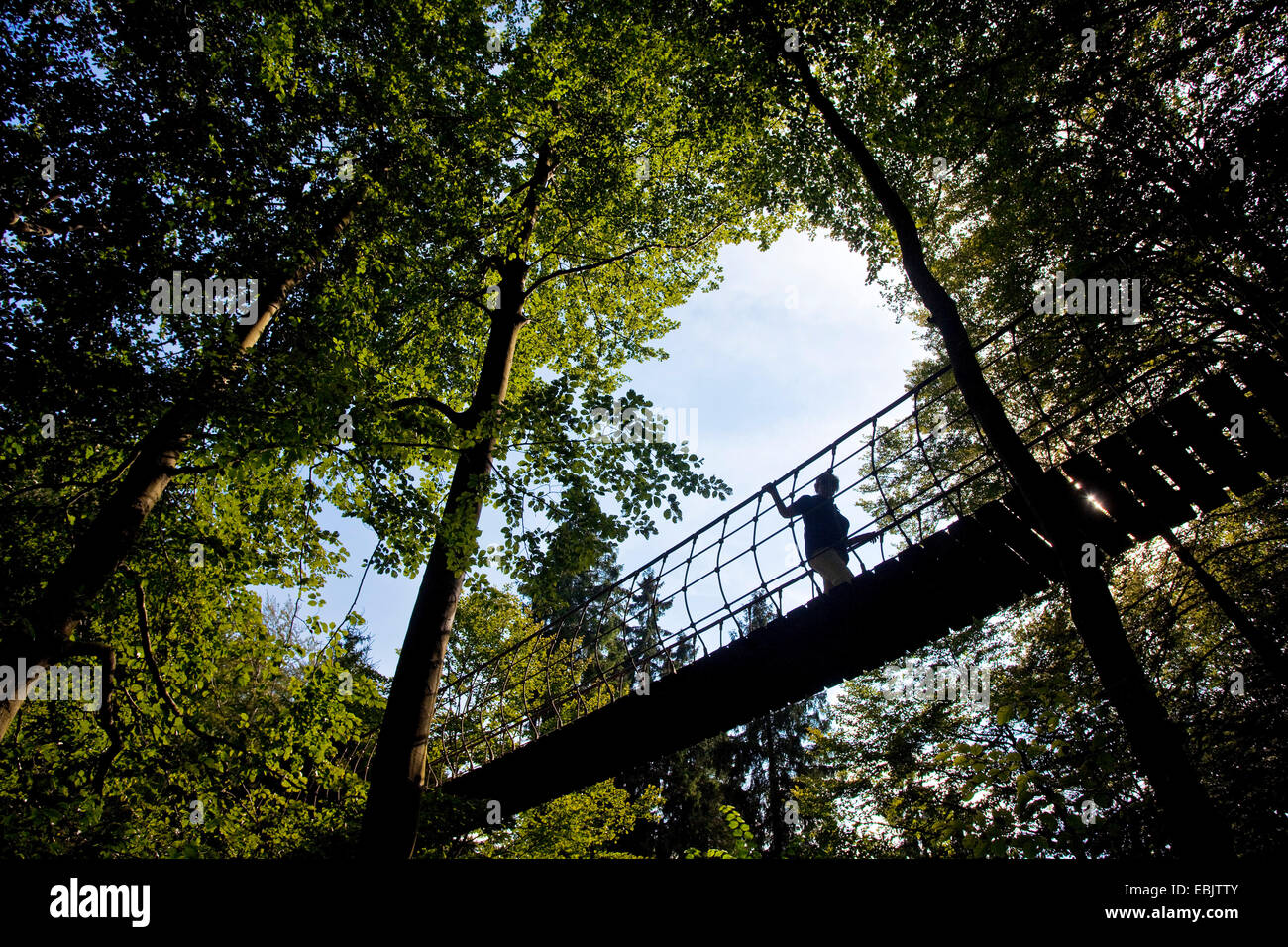 woman on the swaying event suspension bridge at the Rothaarsteig at the village Kuehhude, Germany, North Rhine-Westphalia, - Stock Image