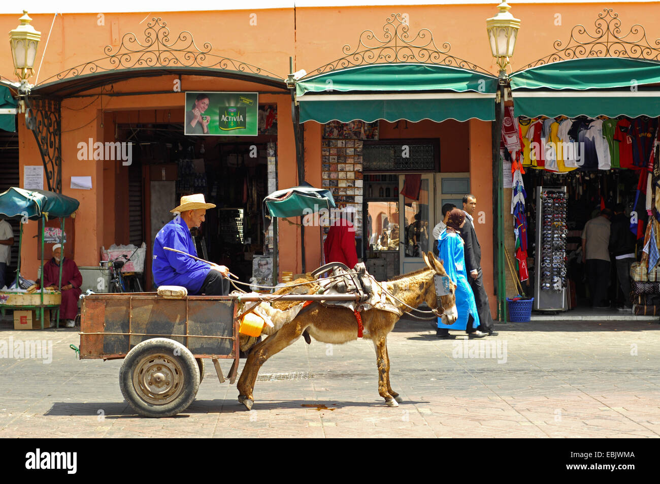 domestic donkey (Equus asinus f. asinus), man sitting in donkey cart Jemaa el-Fnaa market place, Morocco, Marrakesh - Stock Image