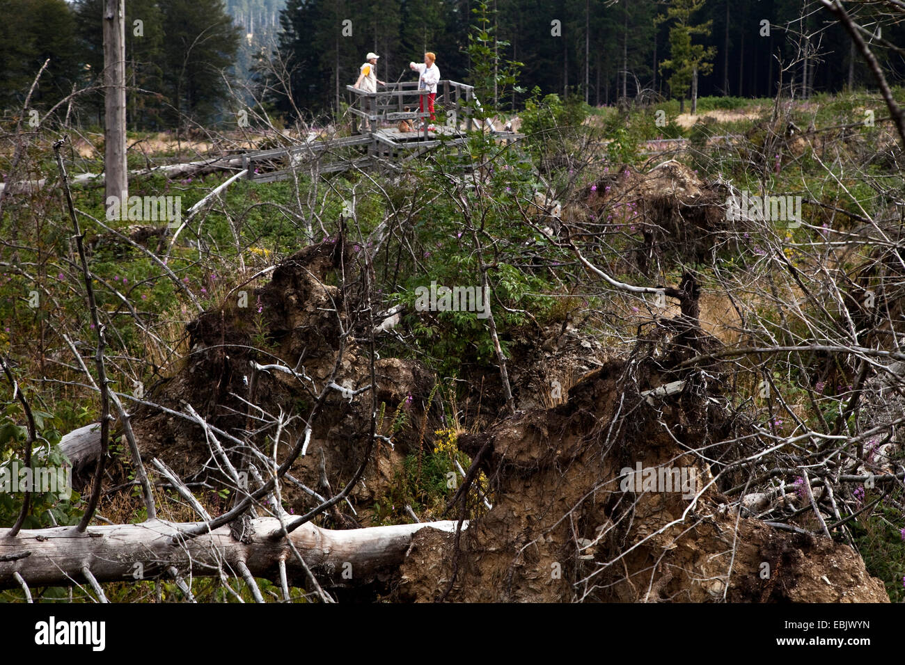 two people looking at storm losses at Kyrill path, Germany, North Rhine-Westphalia, Sauerland, Schmallenberg Stock Photo