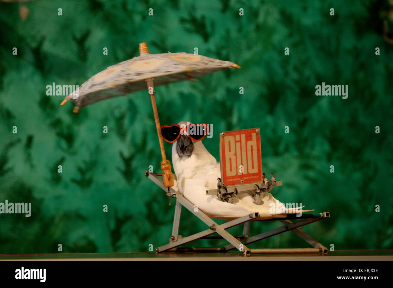Parrot in the deck chair reading newspaper - Stock Image