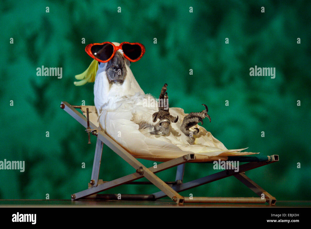 Parrot in the deck chair - Stock Image