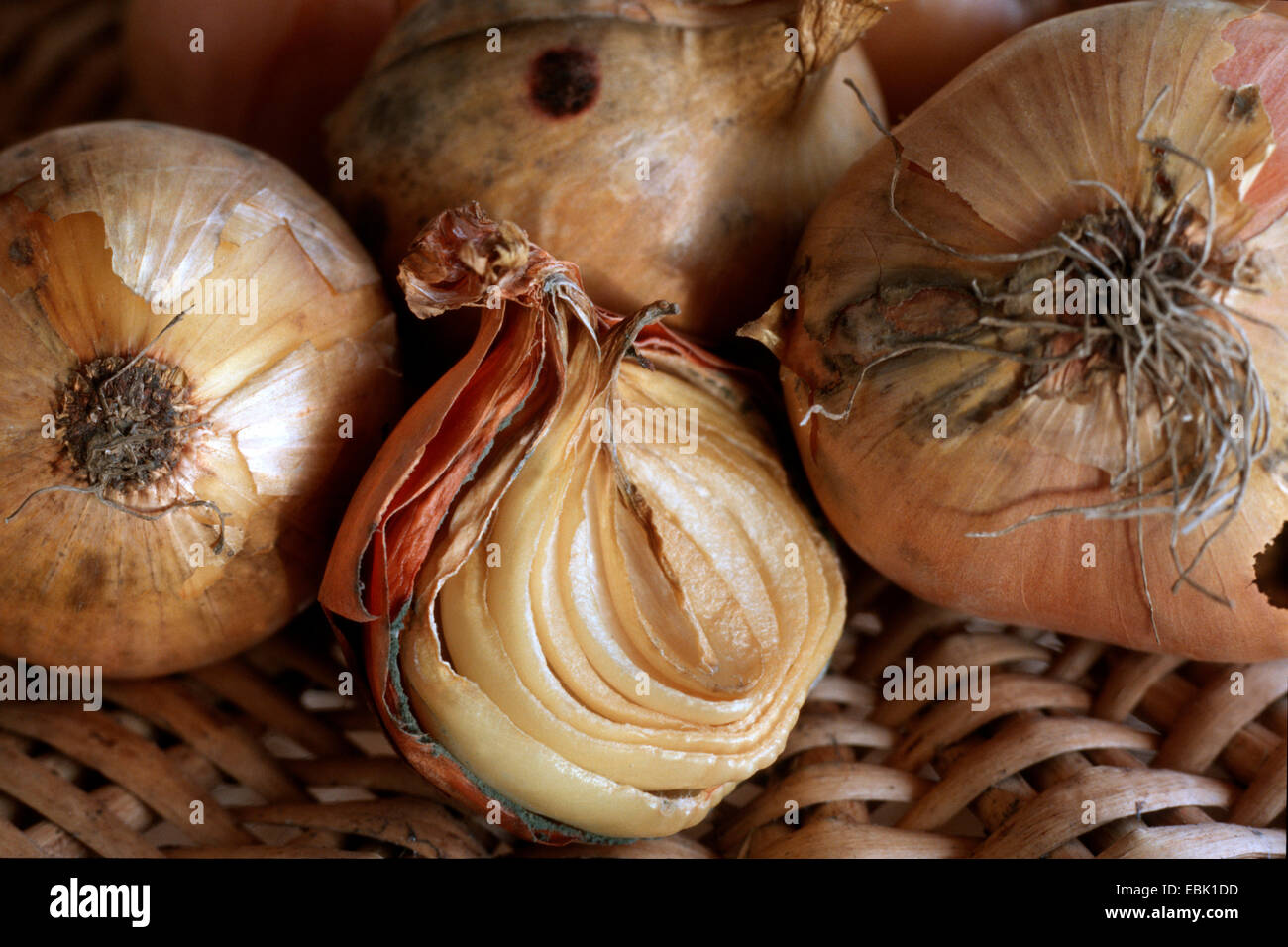 Botrytis allii (Botrytis allii), at onion - Stock Image