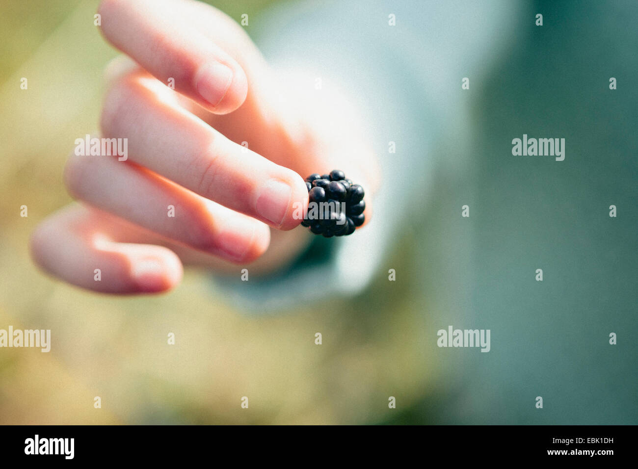 Person holding blackberry, close up Stock Photo