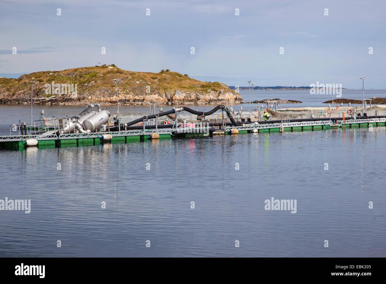 Atlantic salmon, ouananiche, lake Atlantic salmon, landlocked salmon, Sebago salmon (Salmo salar), salmonid farm, - Stock Image