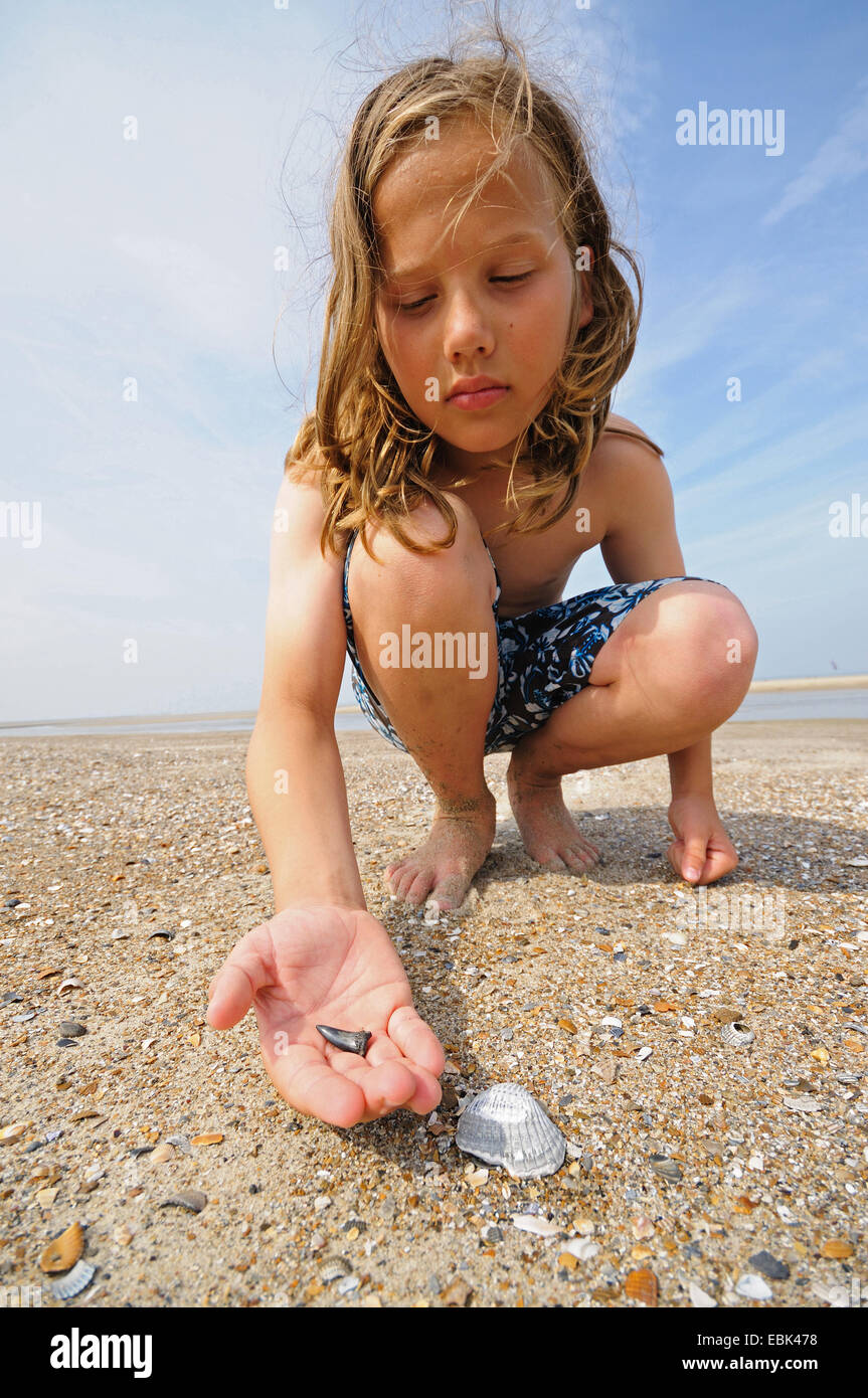 longhaired boy finding a fossilized shark tooth at sandy beach, Netherlands, Cadzand Stock Photo