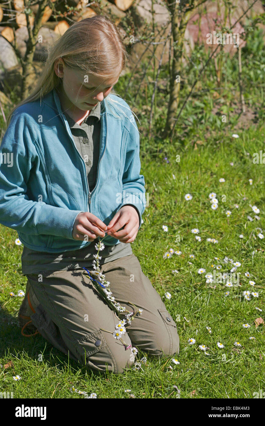girl doing handicrafts herself a girdle of flowers out of English daisies, Germany - Stock Image