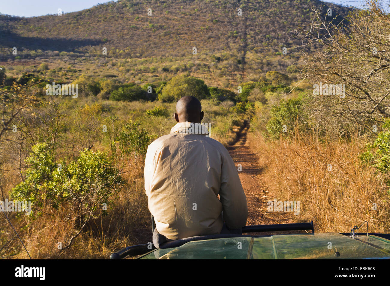 man sitting on bonnet during a safari, South Africa - Stock Image