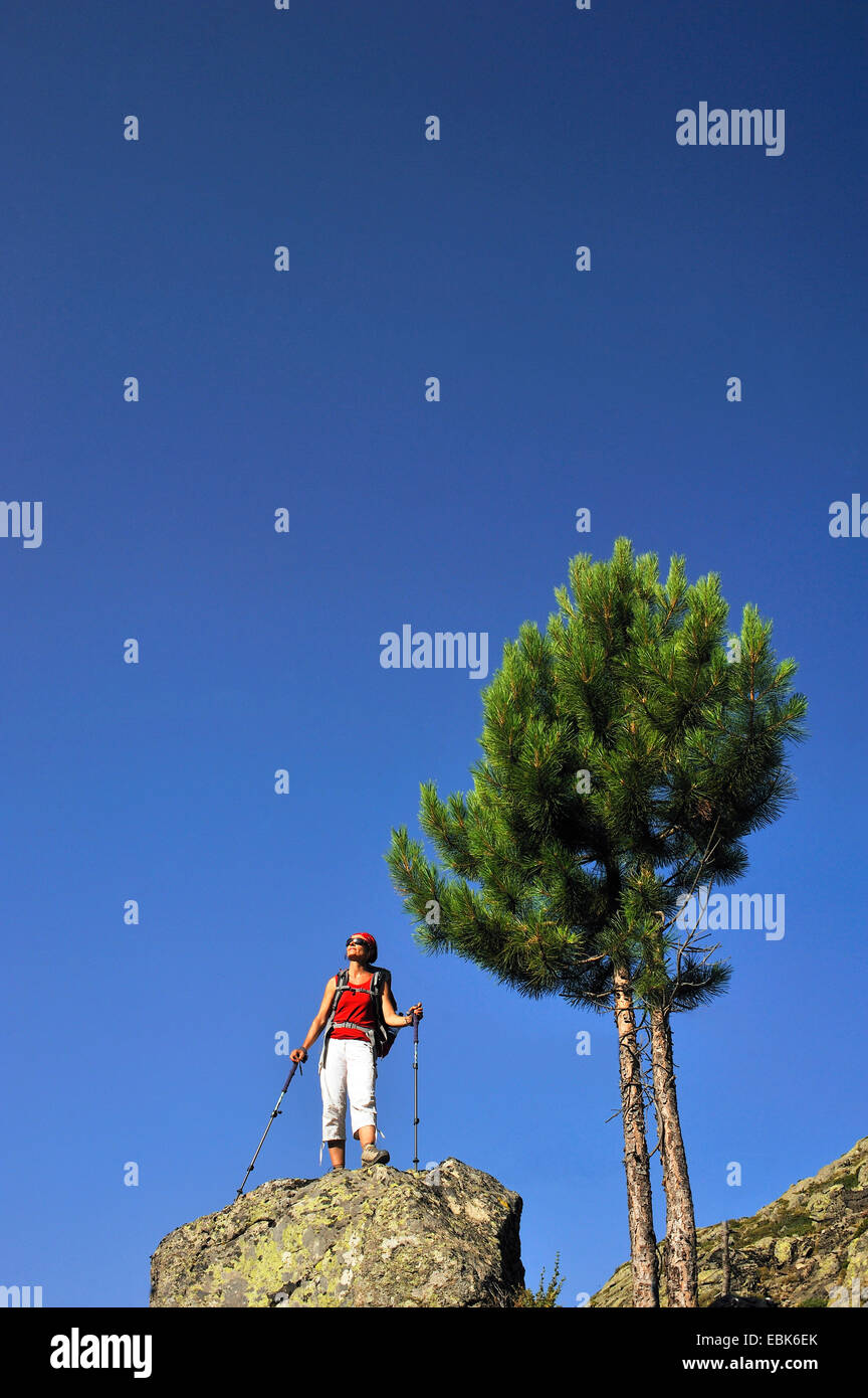 aleppo pine (Pinus halepensis), female wanderer standing on a rock and enjoying the view, France, Corsica, Pietra - Stock Image