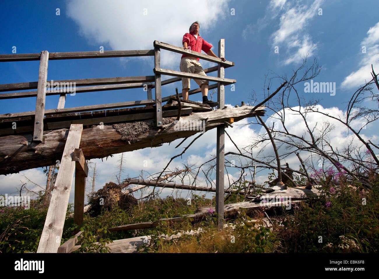 man on Kyrill path looking at storm losses, Germany, North Rhine-Westphalia, Sauerland, Schmallenberg - Stock Image