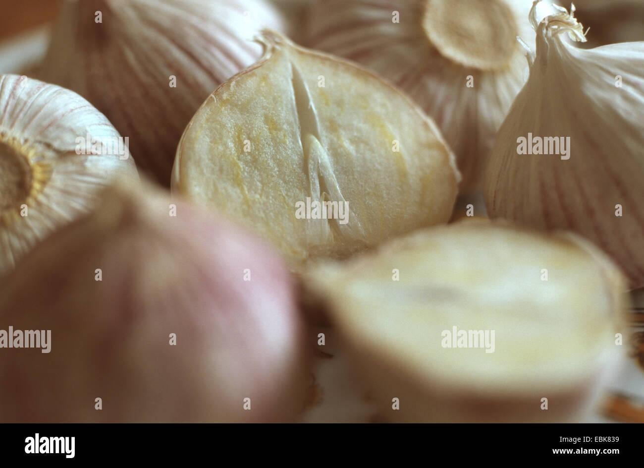 wild leek, elephant garlic, medical plant, medical plants, medicinal plant, medicinal plants, herbalism, useful - Stock Image
