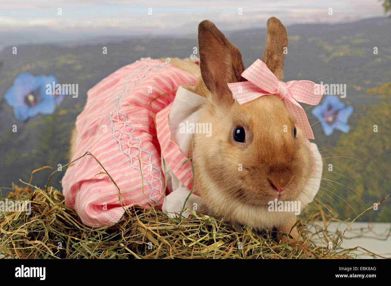 Netherland Dwarf (Oryctolagus cuniculus f. domestica) sitting with a pink dress in & Pet Rabbit In Carnival Costume Stock Photos u0026 Pet Rabbit In Carnival ...