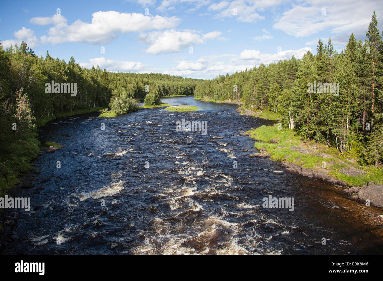river with auburn water running through a primeval pine forest, Russia, Karelien, Keret River - Stock Image