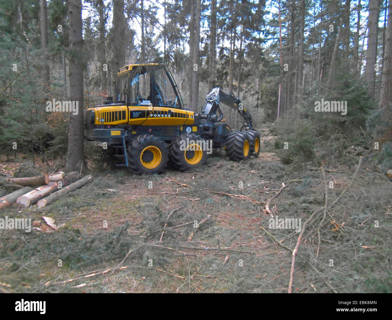 harverster machine in a conifer forest, Germany, Lower Saxony Stock Photo