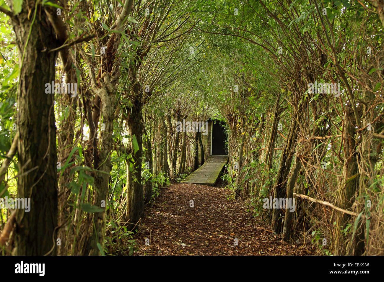 path to birding hut Jan Durkspolder, Netherlands, Frisia - Stock Image