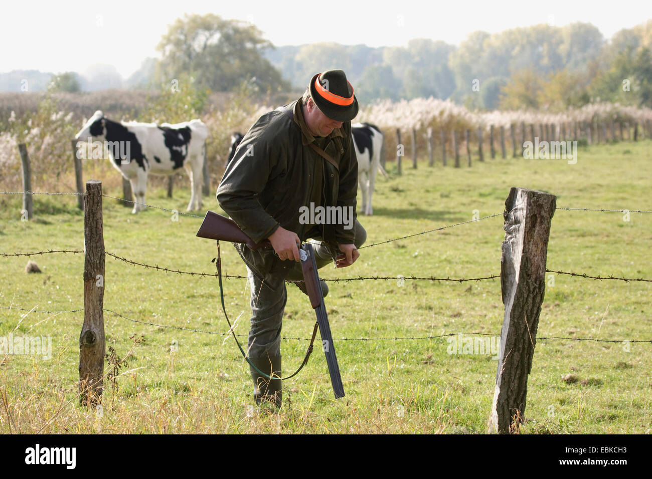 hunter climbing over the barbed wire fence at a pasture, Germany ...