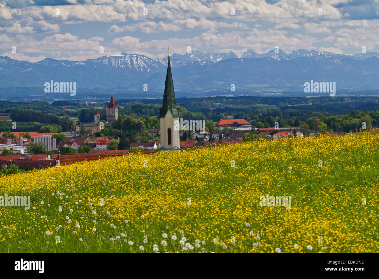 Alpine foothills, view over flower maedow, church and castle to the Alps, Germany, Bavaria, Haag - Stock Image