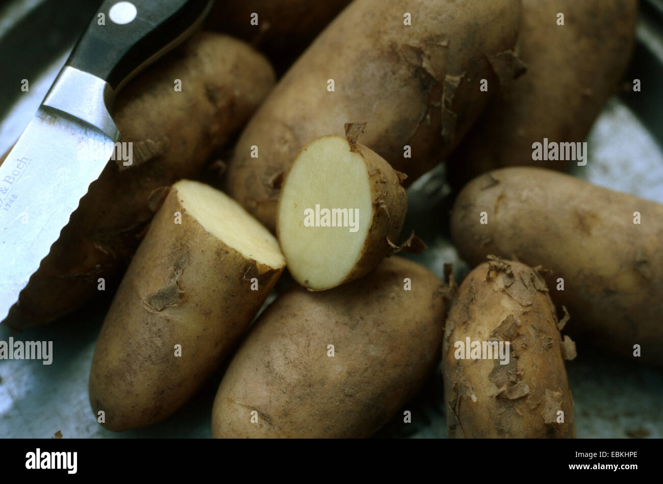 potato (Solanum tuberosum Annabelle), some tubers of the waxy cultivar Annabelle, some cut Stock Photo