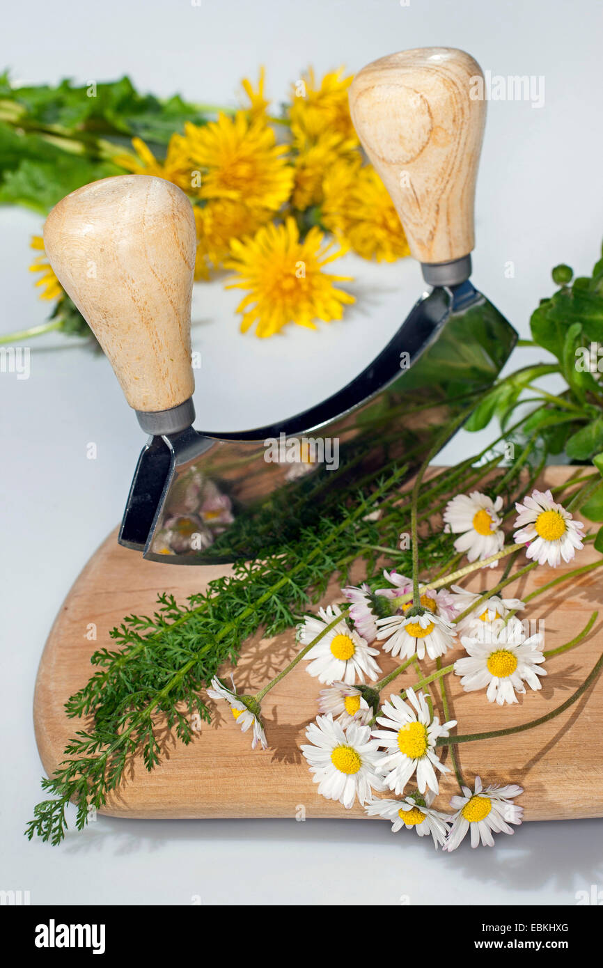 edible wild herbs are cut with a chopper - Stock Image