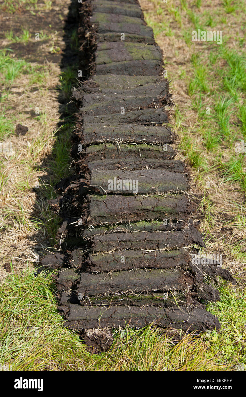 peat cutting, sods of peat, Germany, Lower Saxony, Wilhelmsfehn - Stock Image