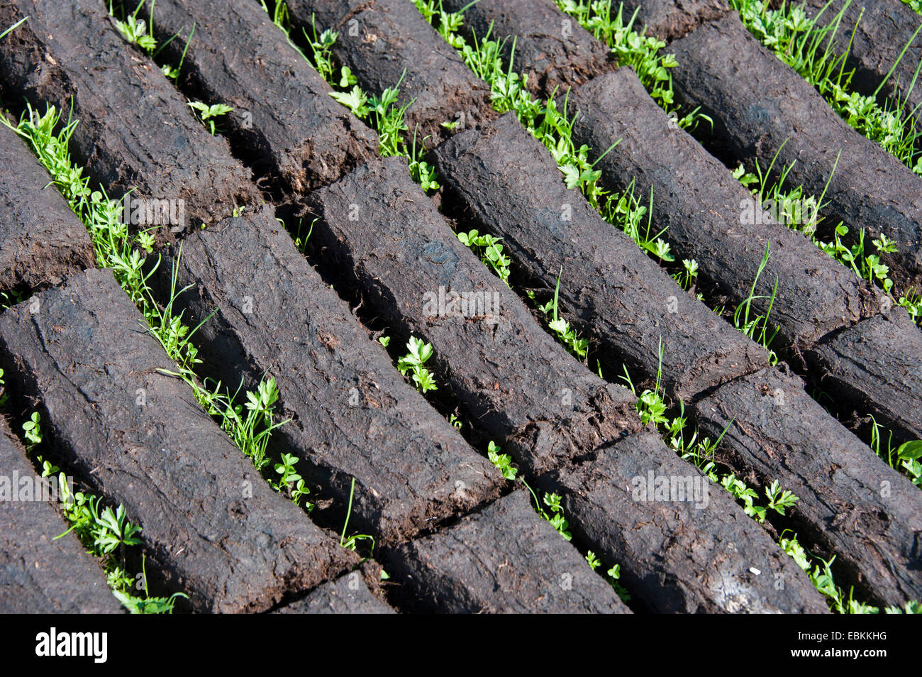 sods of peat, Germany, Lower Saxony, Wilhelmsfehn - Stock Image